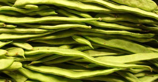 الفاصولياء بين الصحة والغذاء ..منها البيضاء والحمراء والخضراء