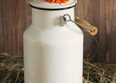 الحليب البقري ؛ والأطفال الرضع وقيمته الغذائية هل هو مناسب للفئة العمرية الصغيرة