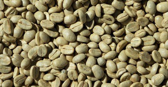 هل القهوة الخضراء تُحفز على تخسيس الوزن حقائق وارقام في هذا الموضوع